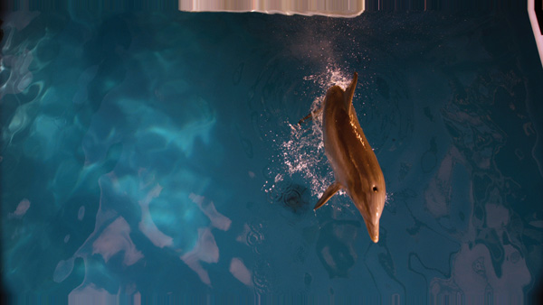 Spin-vfx-dolphin-tale10