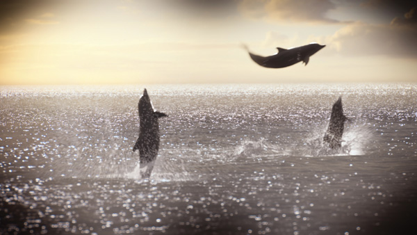 Spin-vfx-dolphin-tale18