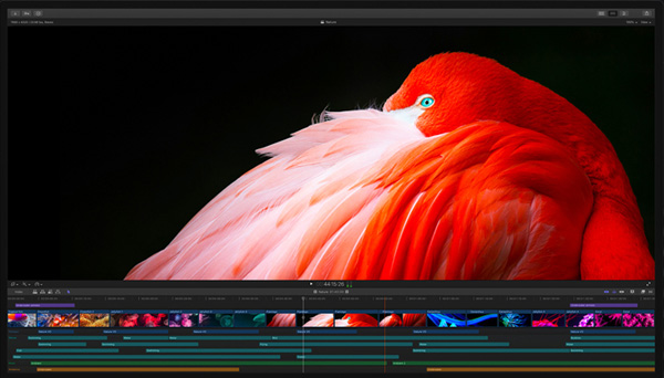 Apple Display Pro xdr Workflow1