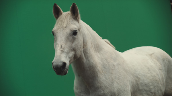 GPS-Betfair-horse-and-greenscreen